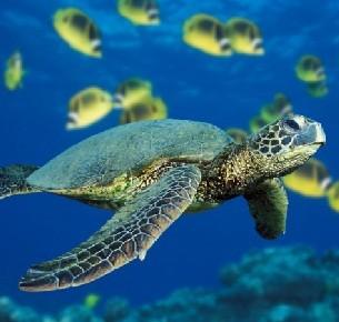 corso di sub con moduli di teoria, immersioni in piscina e in mare... al Diving Nervi ITC!! Esplora i fondali marini in totale sicurezza!! Validità 6 mesi!