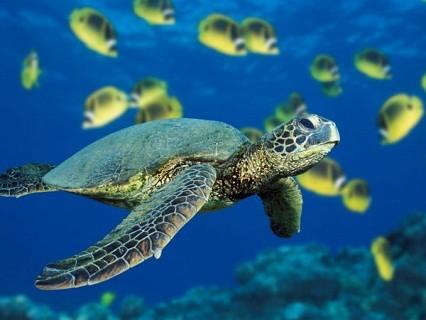 corso di sub con moduli di teoria, immersioni in piscina e in mare... al Diving Nervi ITC!! Esplora i fondali marini in totale sicurezza!!
